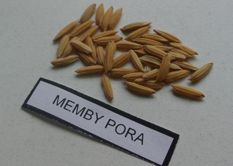 memby-4